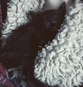 kedim Mia